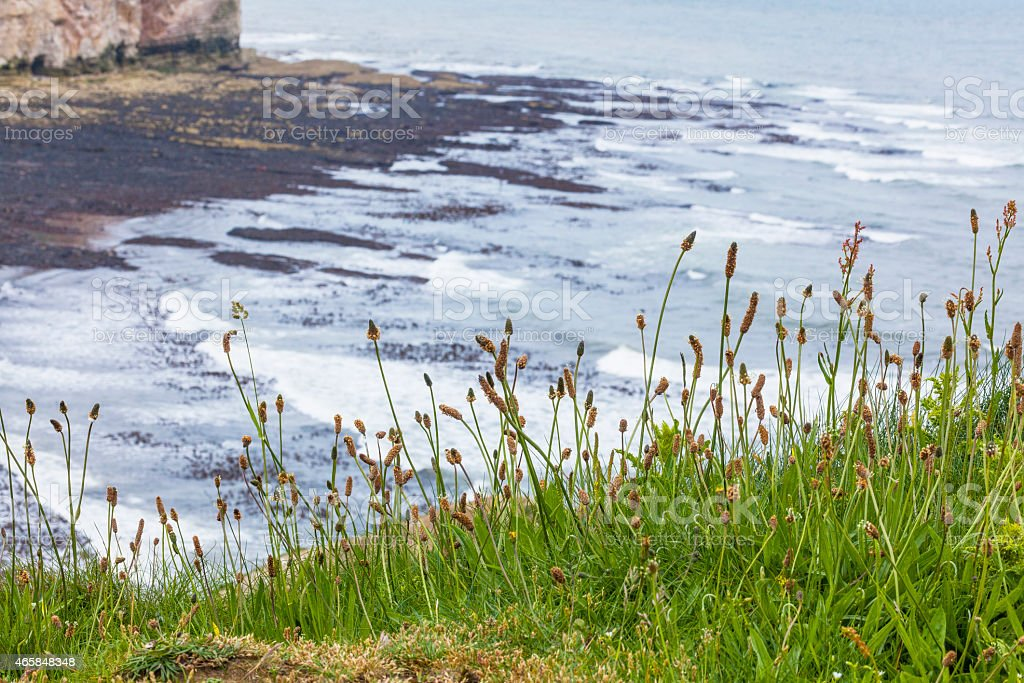 Grassy outcrop at Flamborough Head stock photo