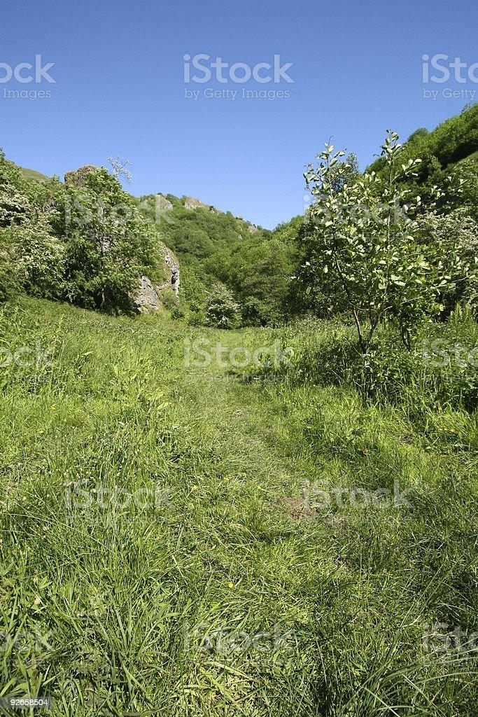 Grassy Path stock photo