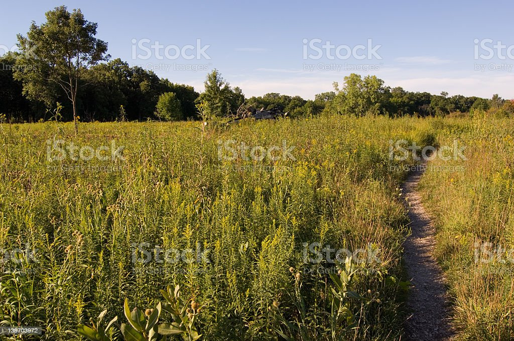 Grassy Pathway royalty-free stock photo