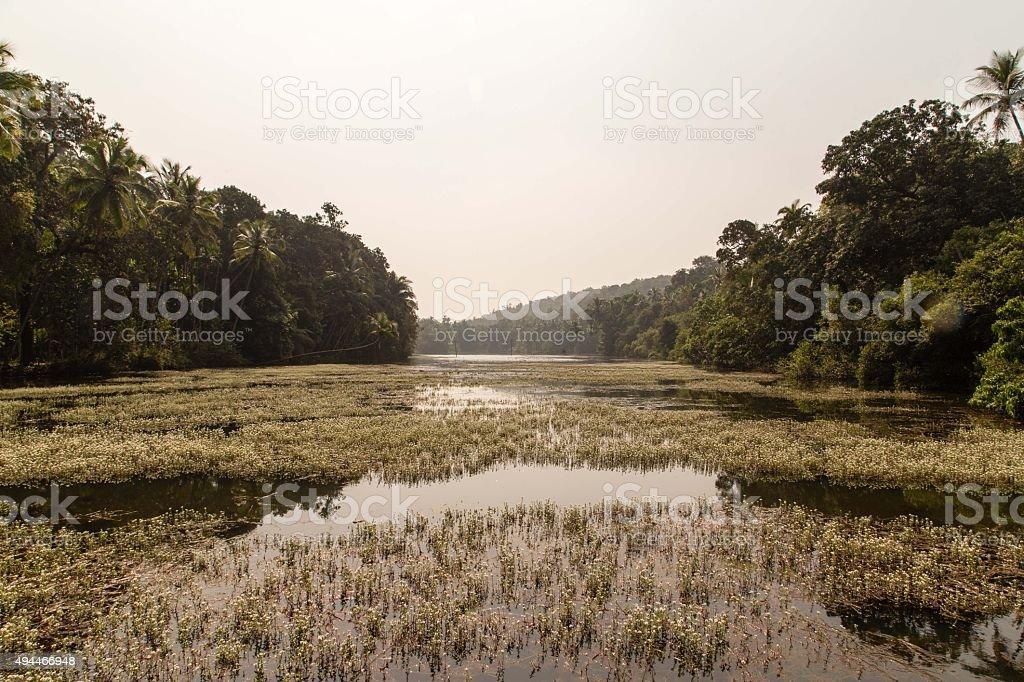 Grassy River stock photo