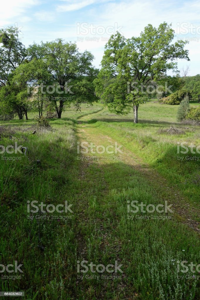 Grassy Trail Winding Through Trees in the Springtime stock photo