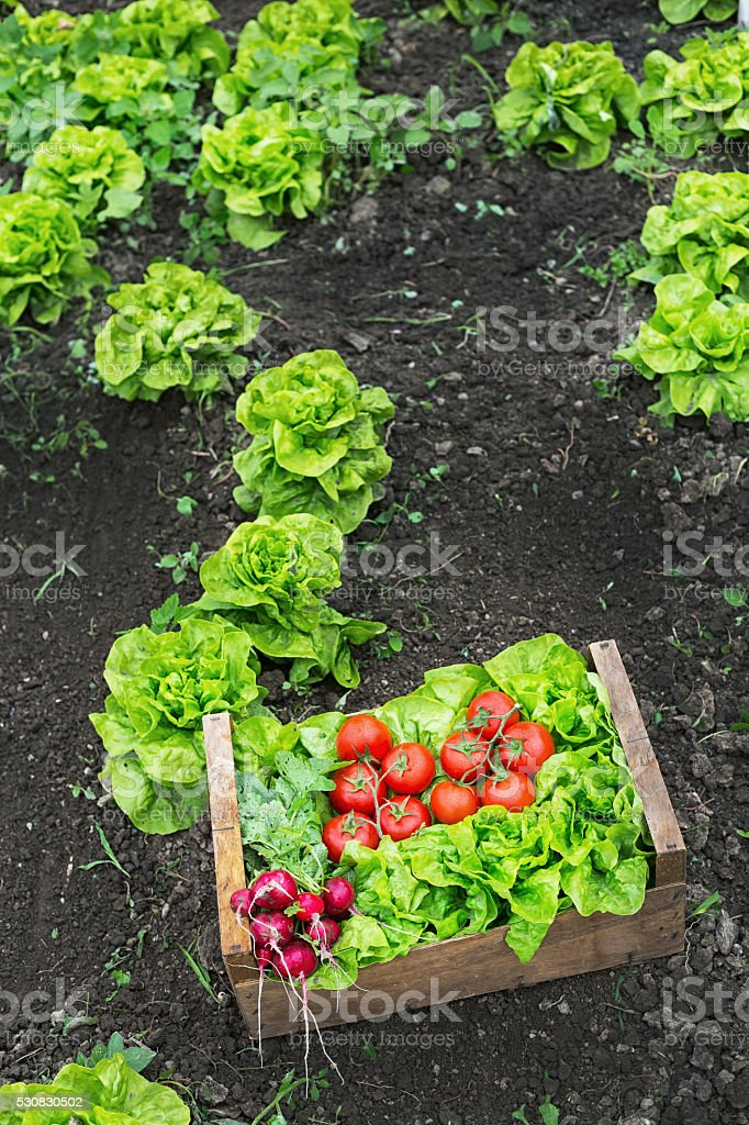 Grate full of raw vegetables leaning on ground stock photo