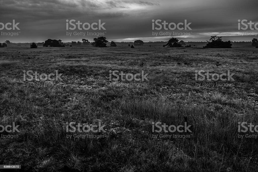 Graue Landschaft stock photo