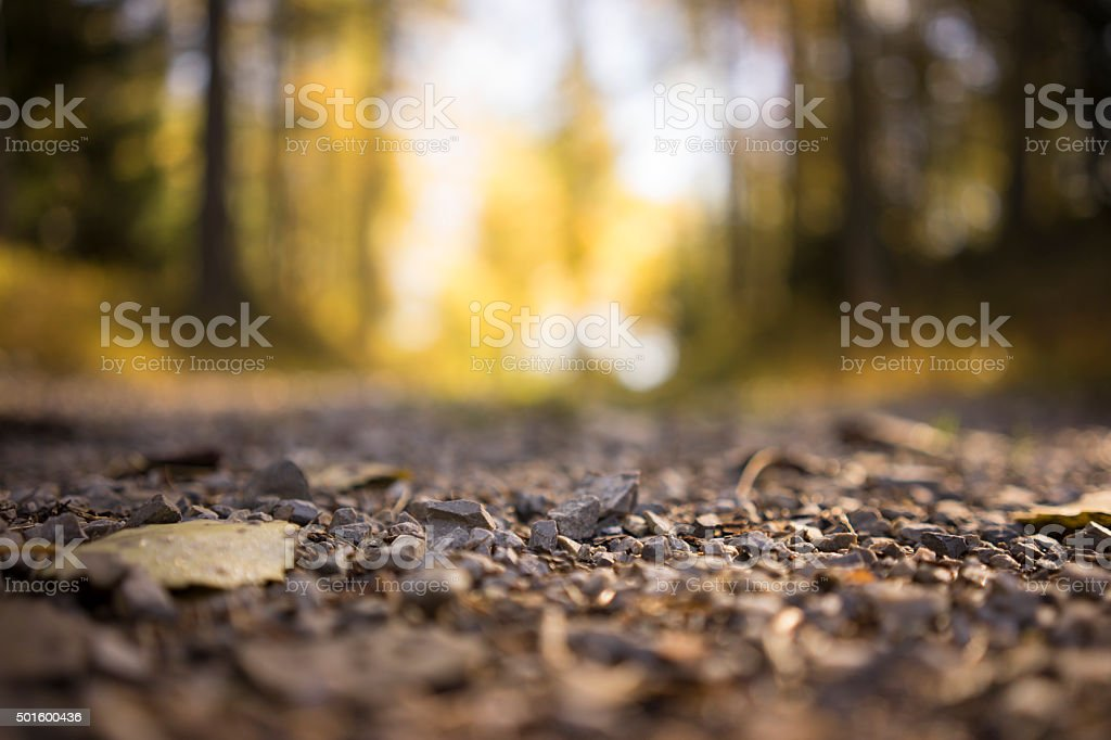 Gravel on Rural Country Road Through Forest stock photo