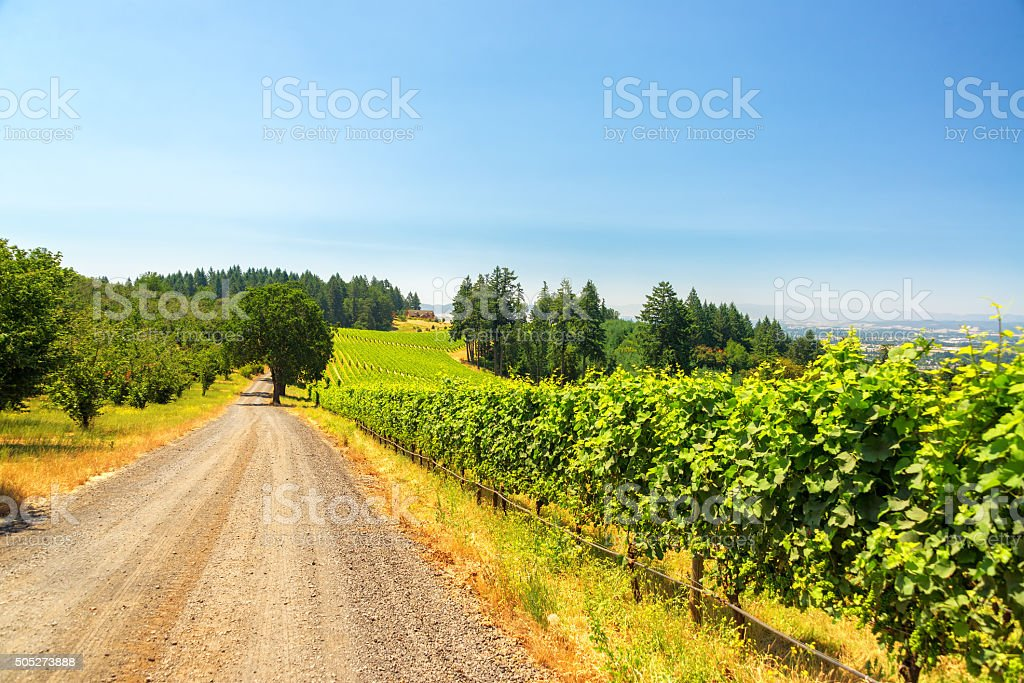 Gravel Road and Vineyard stock photo