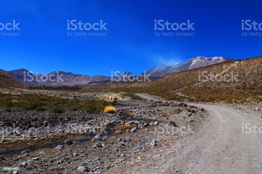 gravel road goes to the active volcano lascar and passes a herd of lamas stock photo