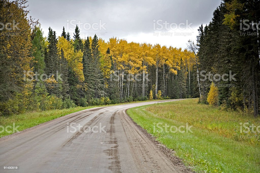 Gravel Road in Northern Forest stock photo