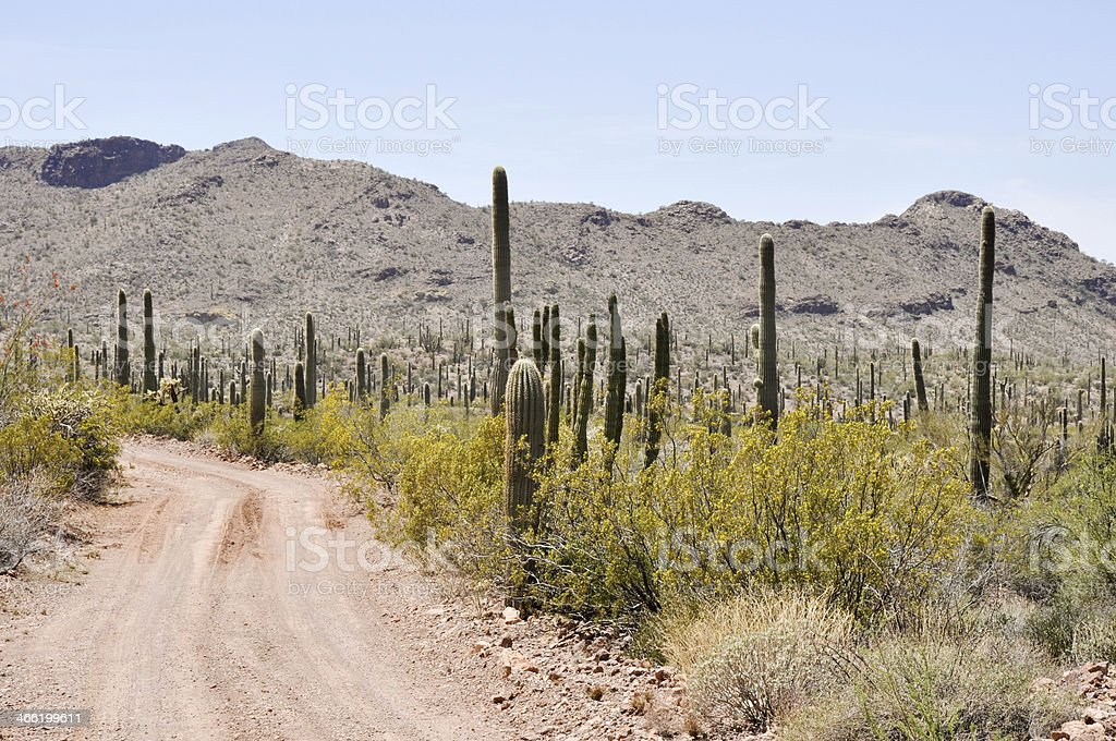 Gravel road, Organ Pipe Cactus National Park, Arizona royalty-free stock photo
