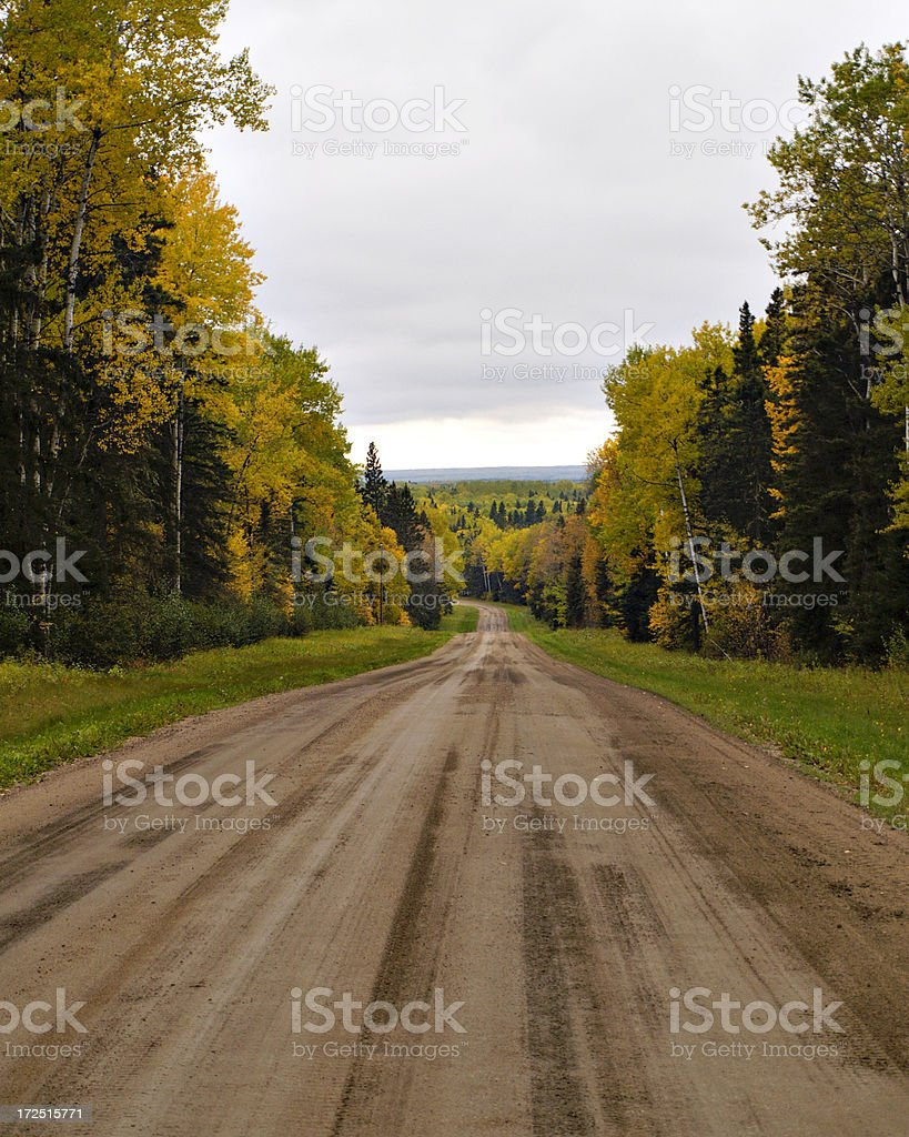 Gravel Road Through Forest stock photo