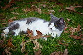 Gray and White Kitten Laying in Grass