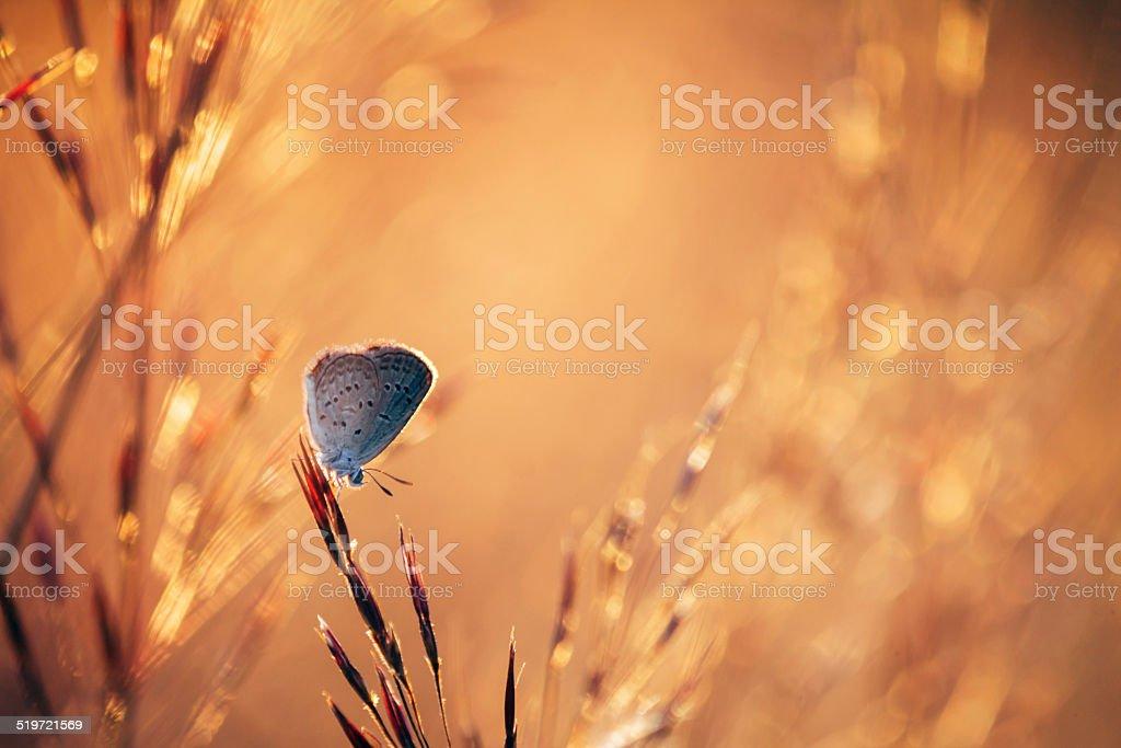 Gray butterfly in warm field. stock photo