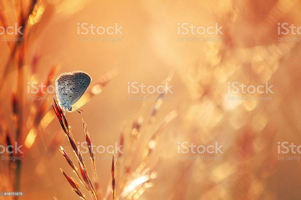 Gray butterfly in warm field stock photo