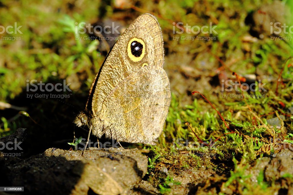Gray butterfly stock photo