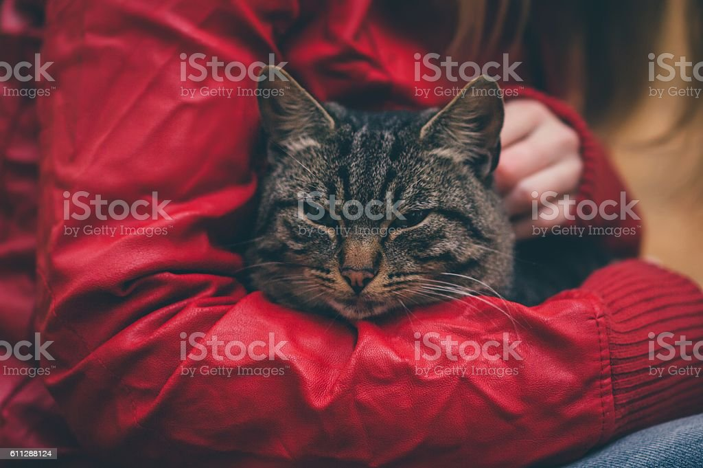Gray Cat homeless and Woman hugging stock photo