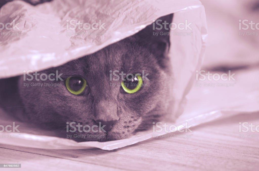 Gray cat looks at the camera. stock photo
