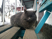 Gray cat on bench