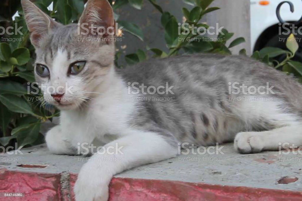 Gray Cat stock photo