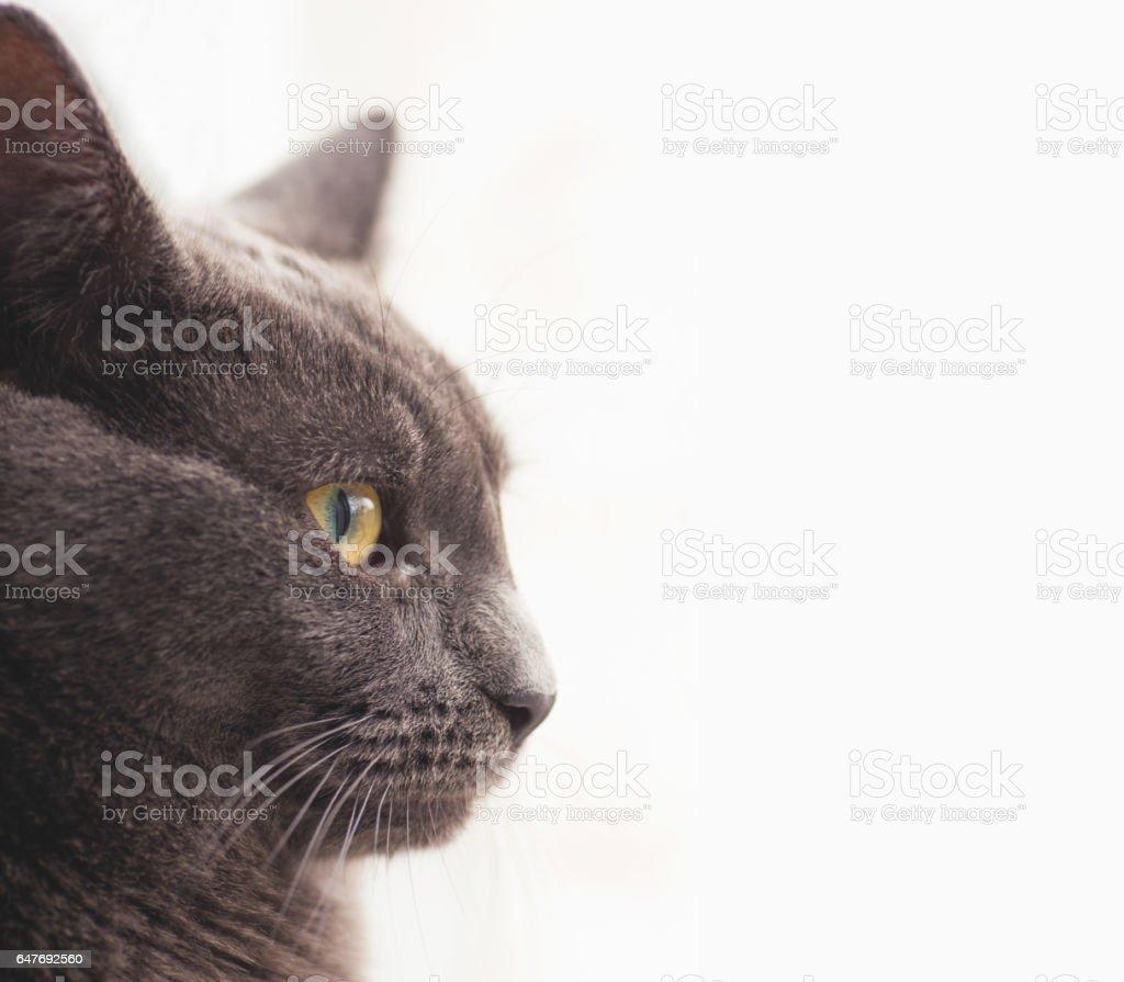 Gray cat profile. stock photo