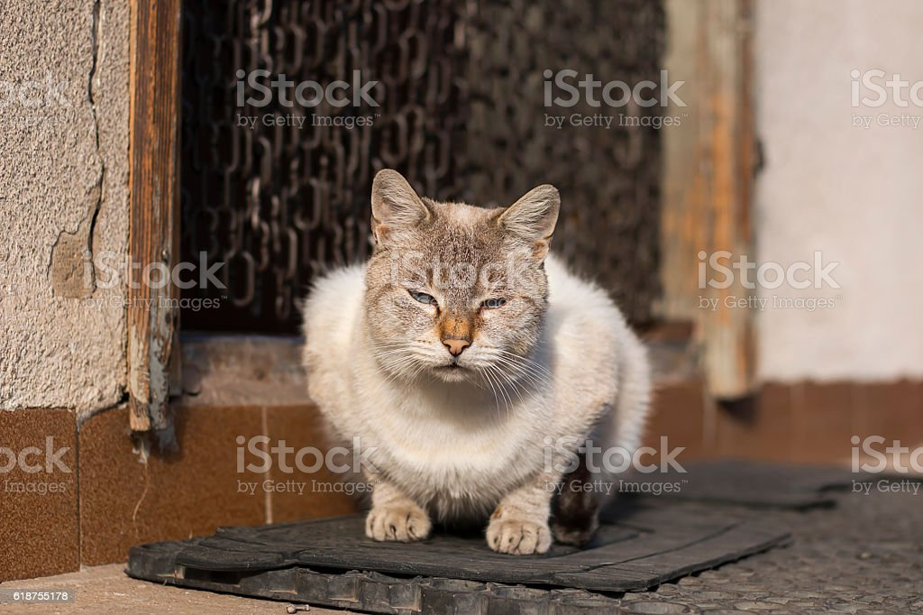 Gray cat sitting in front of an old house door stock photo