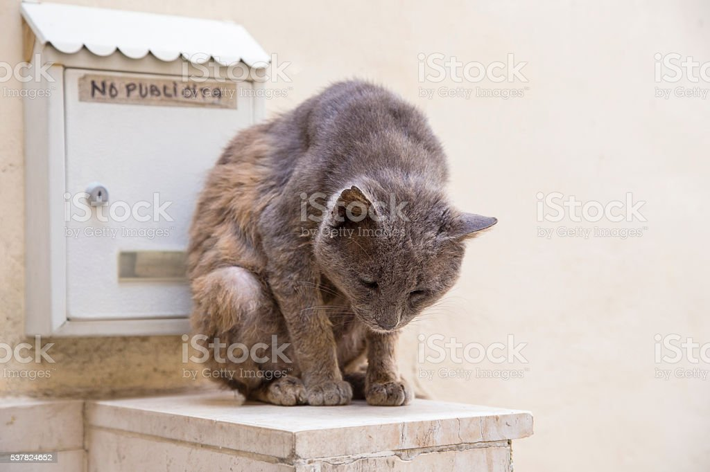 Gray cat sitting near mailbox stock photo