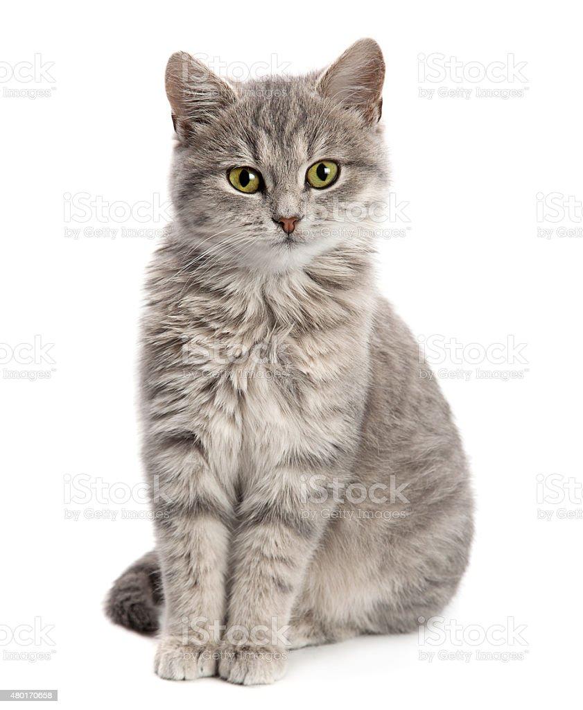 Gray cat sitting stock photo