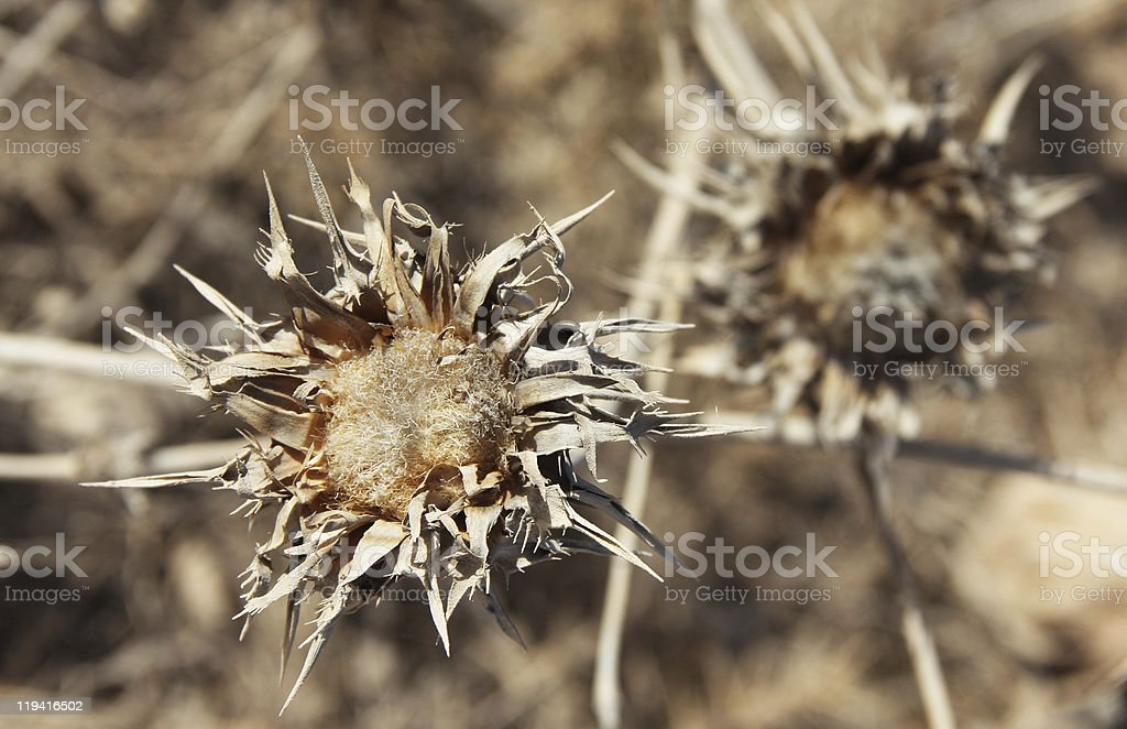 gray faded flower on a background of autumn grass royalty-free stock photo