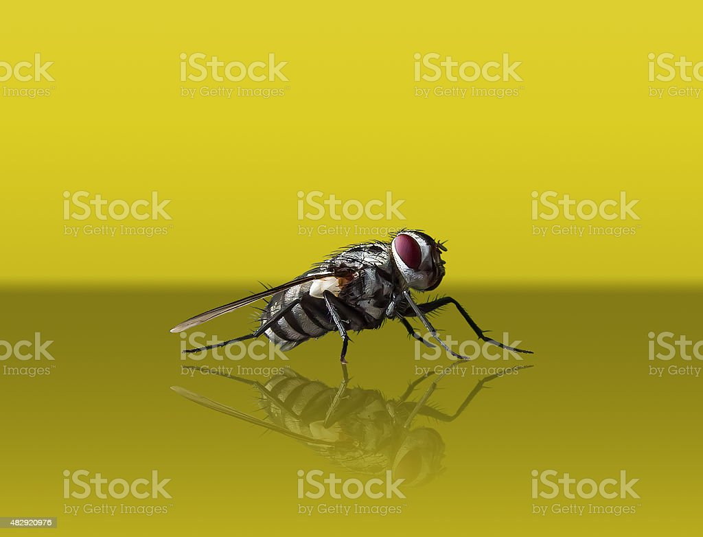gray fly on a yellow background royalty-free stock photo