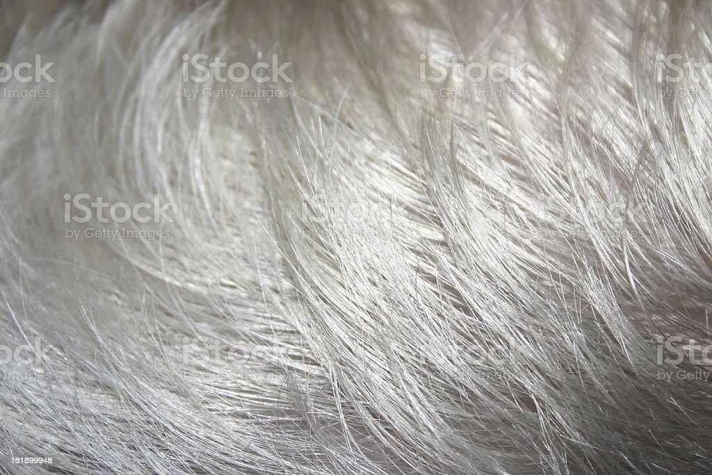 Gray Hair royalty-free stock photo
