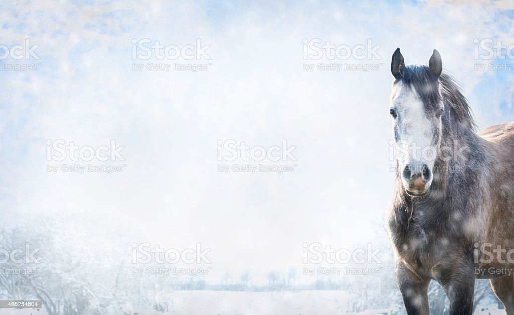 Gray horse on winter landscape with snow, banner for website. stock photo