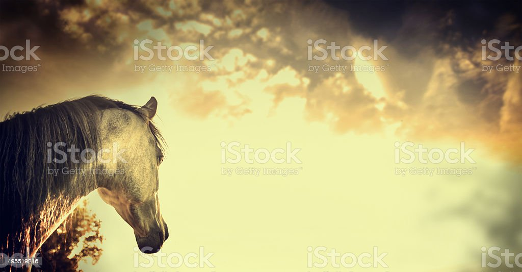 Gray horse portrait on Beautiful over sky background stock photo