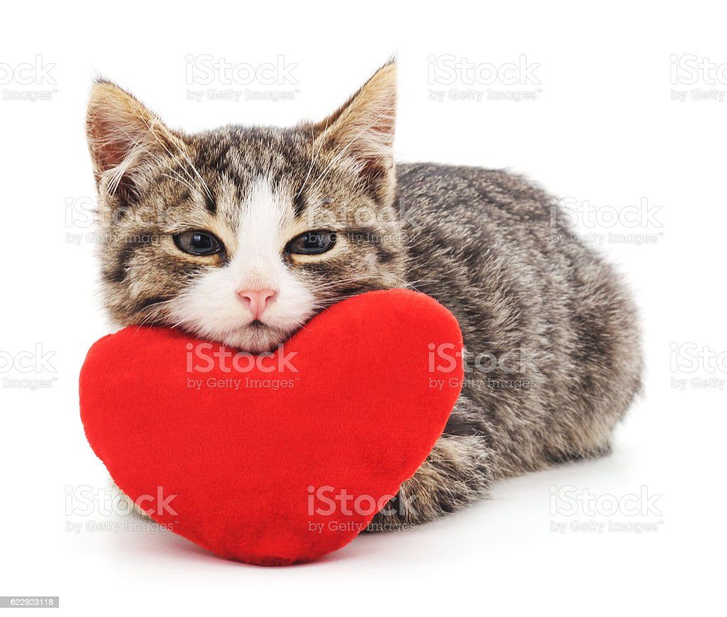 Gray kitten and red heart. stock photo
