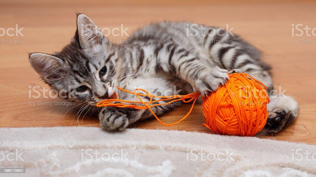 Gray kitten plays. stock photo