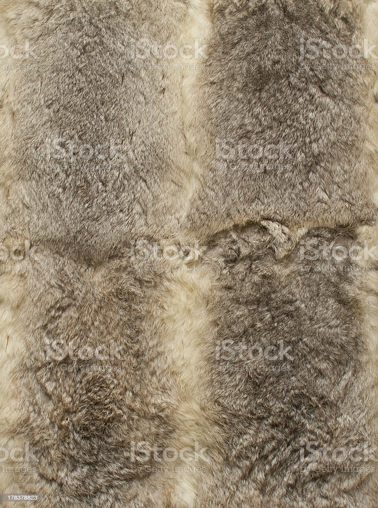 Gray leathers of rabbits, four pieces together stock photo