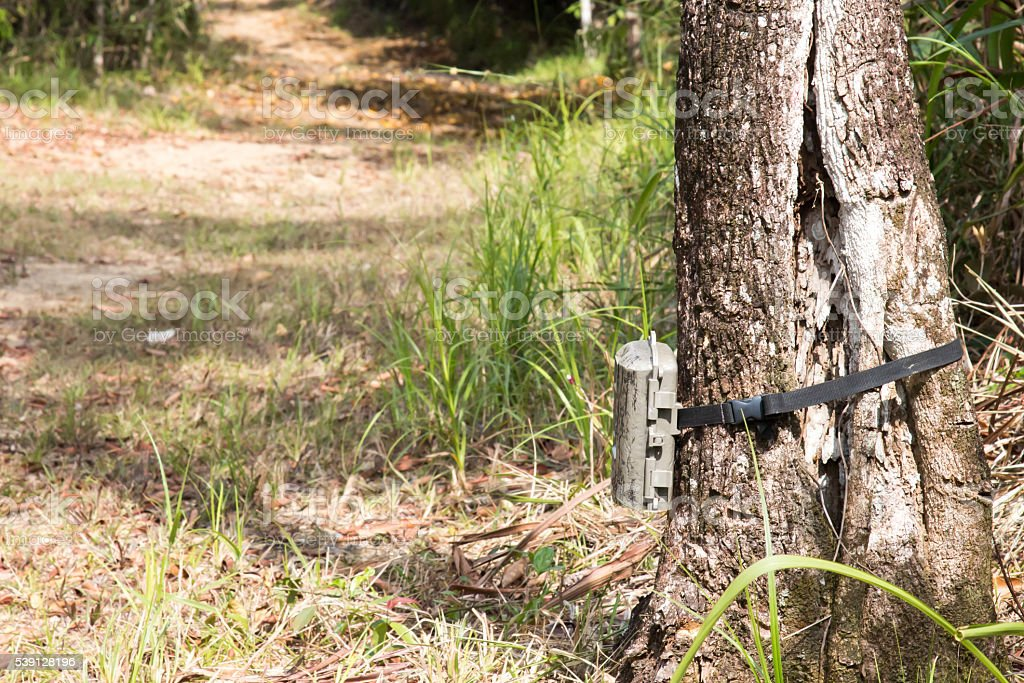 Gray plastic trail camera affixed to a tree trunk stock photo
