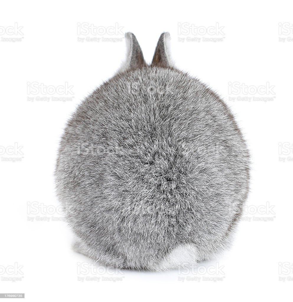 Gray rabbit bunny baby fur ball view from back stock photo