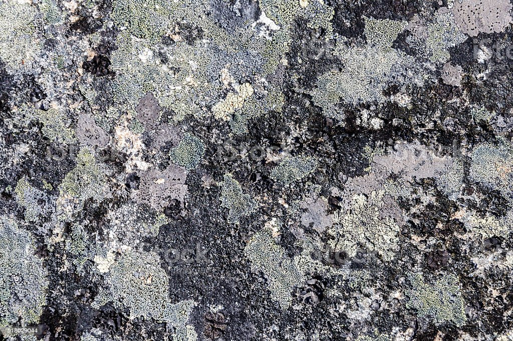 Gray stone with crustose lichen texture stock photo