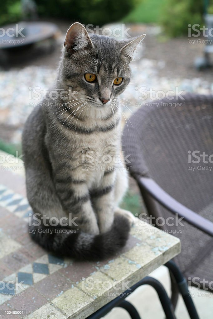 Gato com listras cinza em mesas ao ar livre foto royalty-free