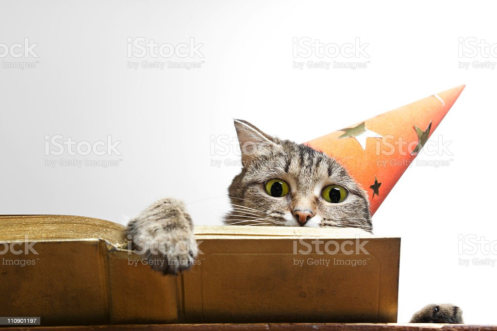 Gray tabby cat with a party hat reading a book stock photo