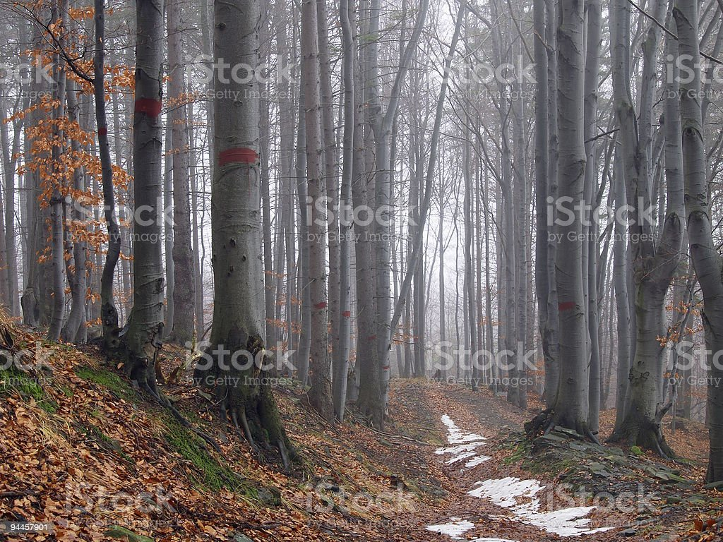 Gray tree trunks and orange leaves on the ground in the wood royalty-free stock photo