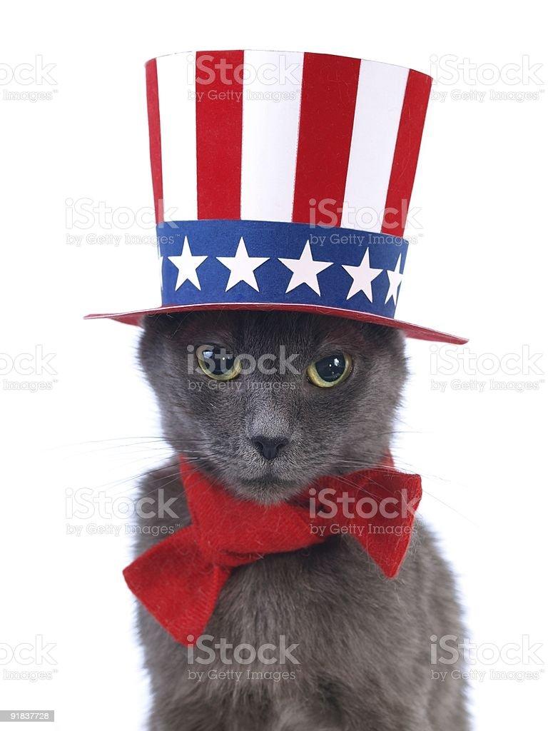 Gray uncle Sam cat stock photo