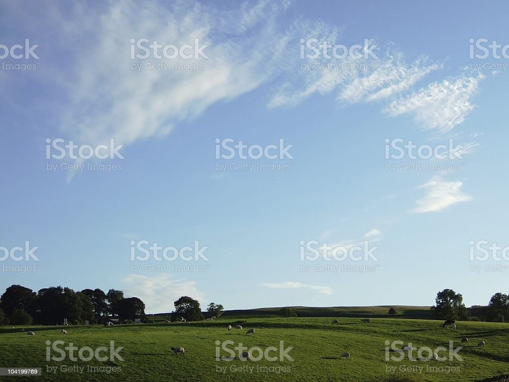Grazing animals in evening light royalty-free stock photo