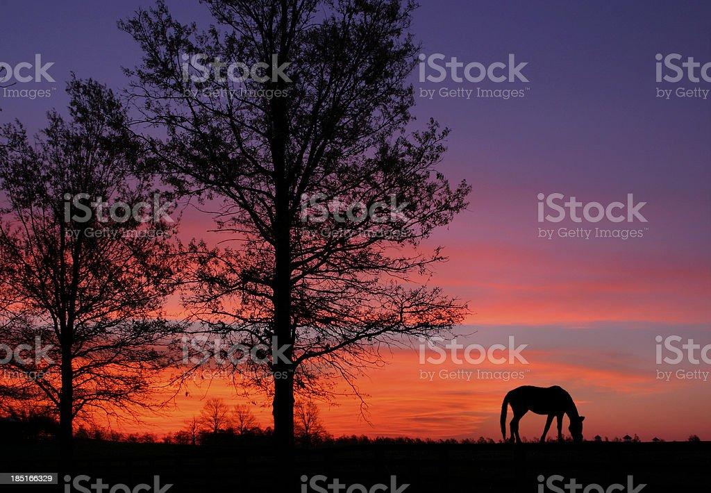 Grazing At Sunrise stock photo