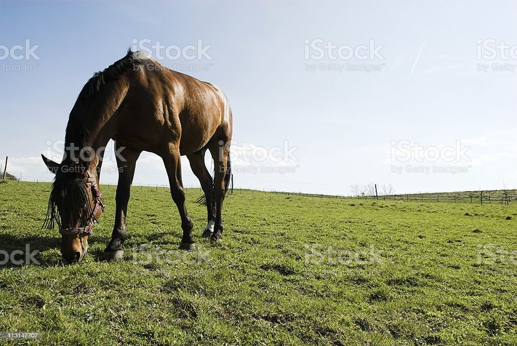 Grazing Bay royalty-free stock photo