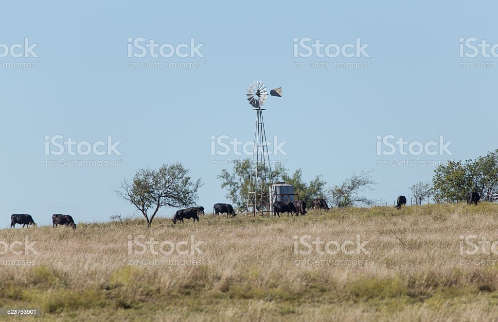 Grazing Cattle and Windmill stock photo