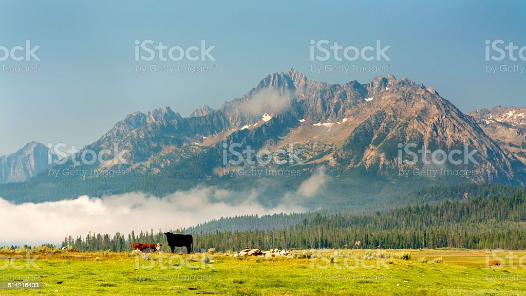 Grazing cows in the magnificent mountains of Idaho stock photo