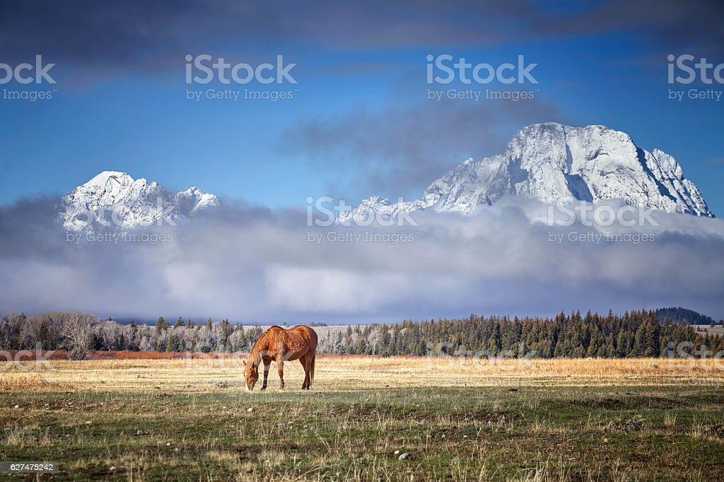 Grazing horse in the Grand Teton National Park, Wyoming, USA stock photo