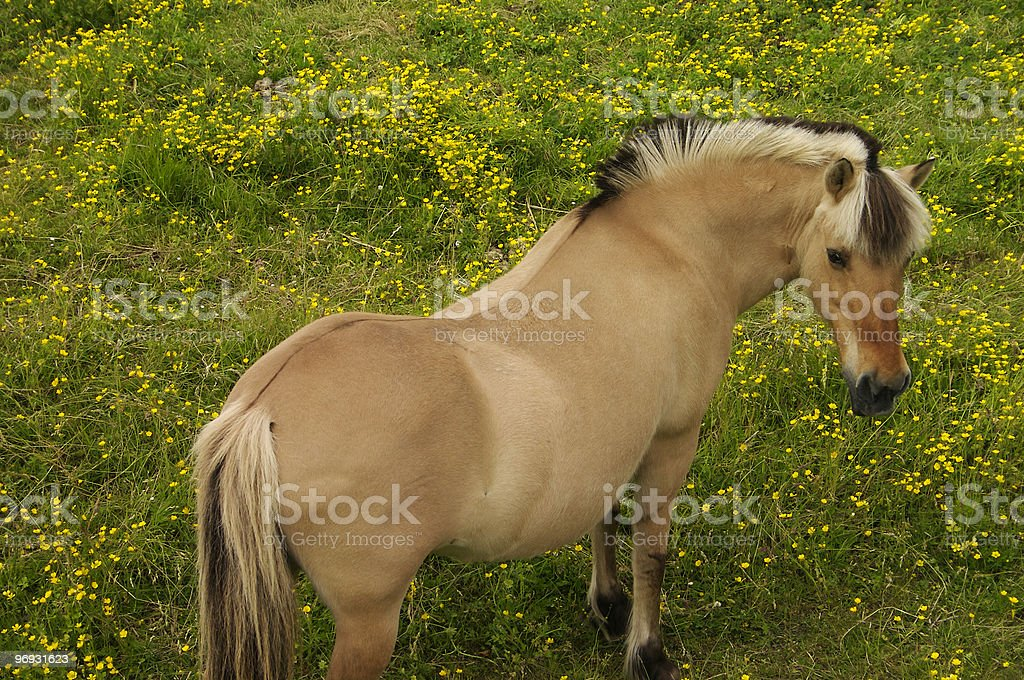 Grazing horse royalty-free stock photo
