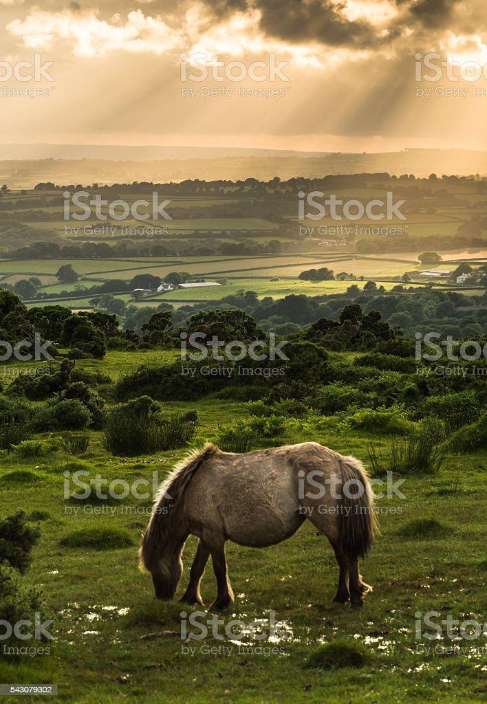 grazing wild ponny horse with dramatic sky stock photo
