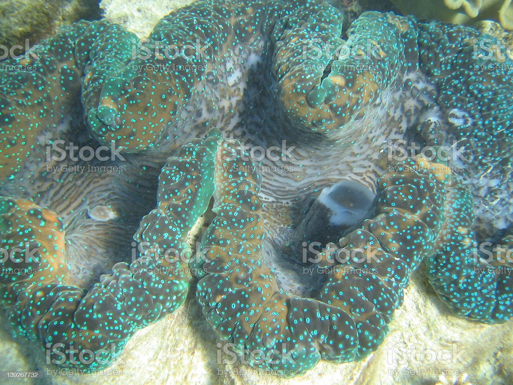 Great Barrier Reef 5 royalty-free stock photo