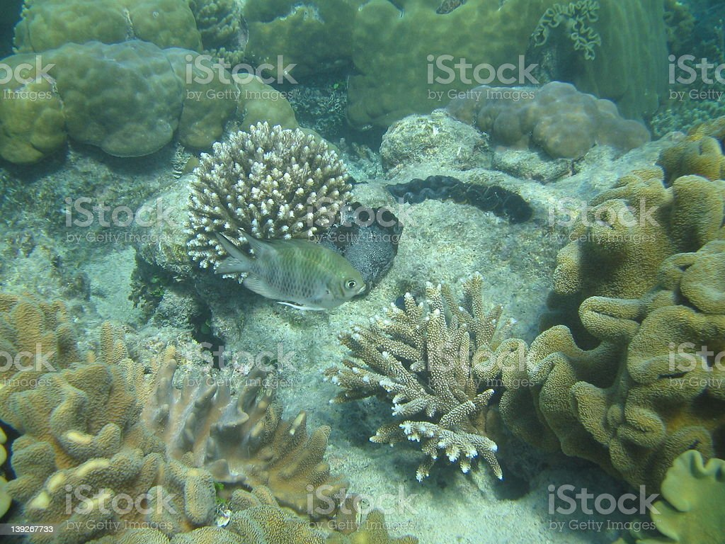 Great Barrier Reef 6 royalty-free stock photo